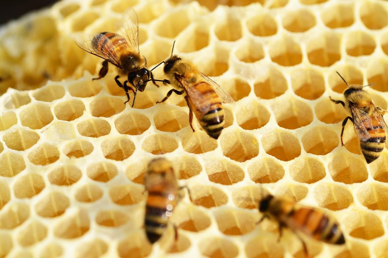 Rodzaje miodów w Polsce- jak powstaje miód? pszczeoły