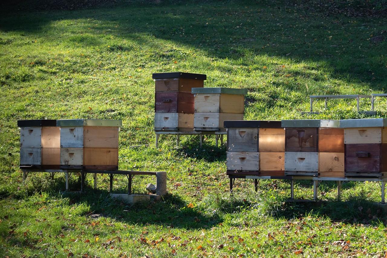 Jak powstaje miód pszczeli